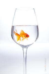 Goldfisch Glas